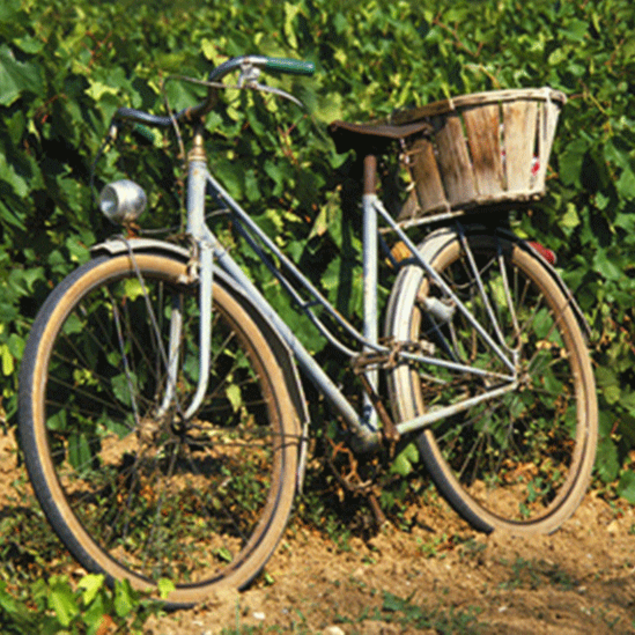 Bicycle from old times leaning against a vine